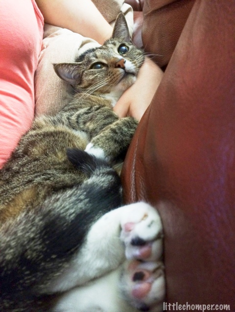 Luna held in arm with two feet pressed against back of sofa