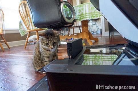Luna looking down into open printer