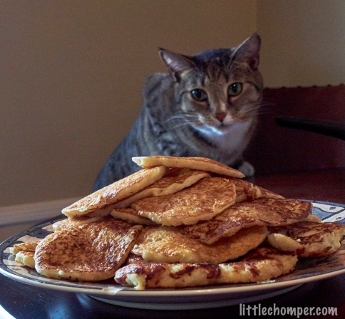 Luna looking forward toward pile of potato pancakes