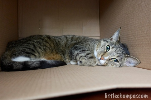 Luna lying on side in box with paw tucked looking at camera