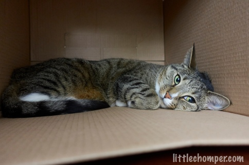 Luna lying on side in box with paw tucked looking to right
