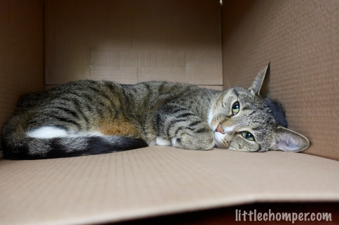 Luna lying on side in box with paw tucked looking up and to left