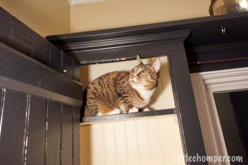 Luna peeks upward from the top shelf of a cabinet