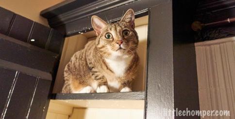 Luna sitting on top shelf of cabinet looking alert