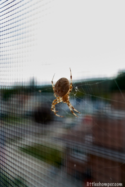 Spider crawling down web behind screen angled