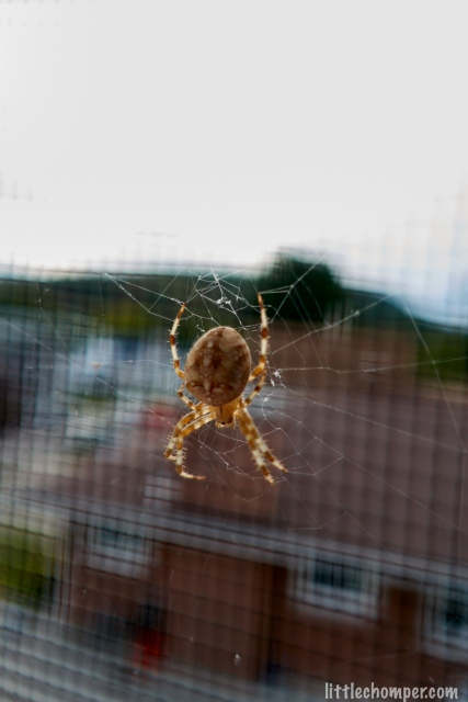 Spider crawling down web behind screen