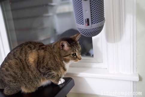Luna beneath microphone on stool looking sad to right