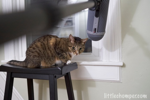 Luna beneath microphone on stool
