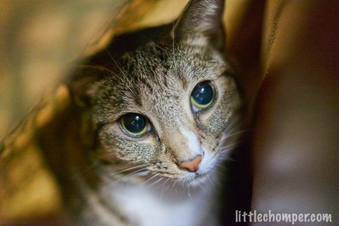 Luna in blanket tent looking stern close up