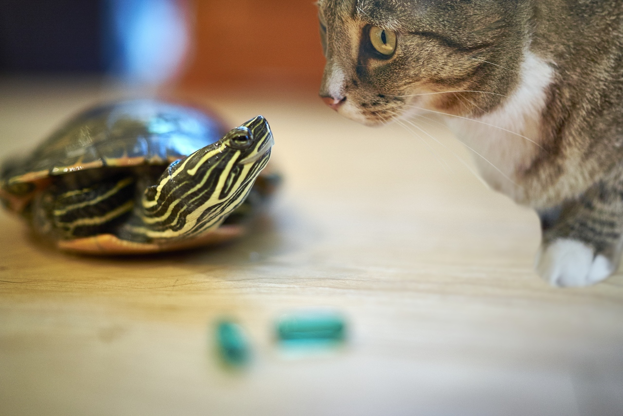 Luna and turtle make drug deal.jpg