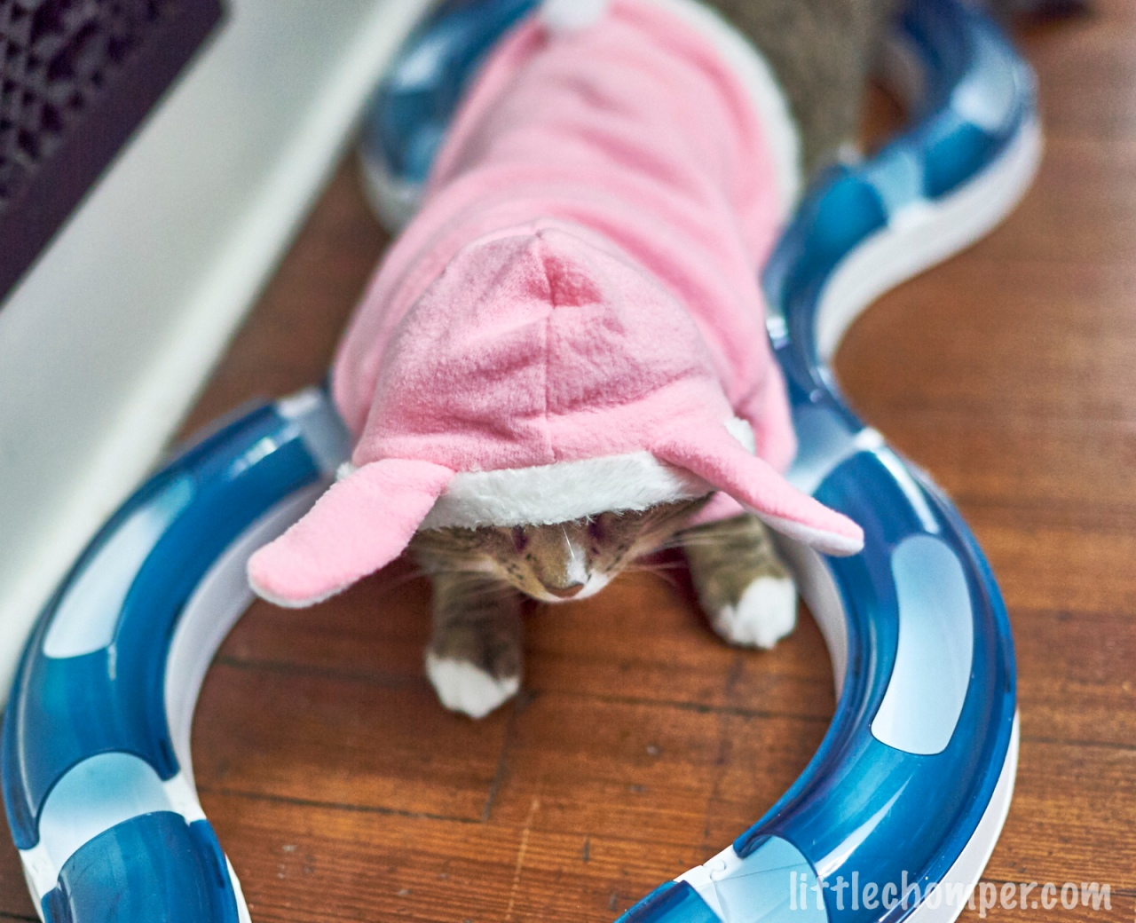 Luna in bunny costume within toy track overhead view.jpg