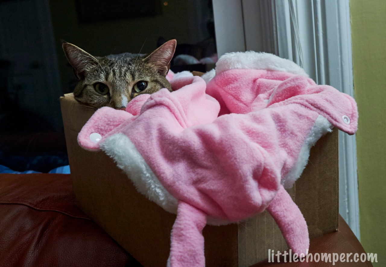 Luna peeking out from under bunny blanket.jpg