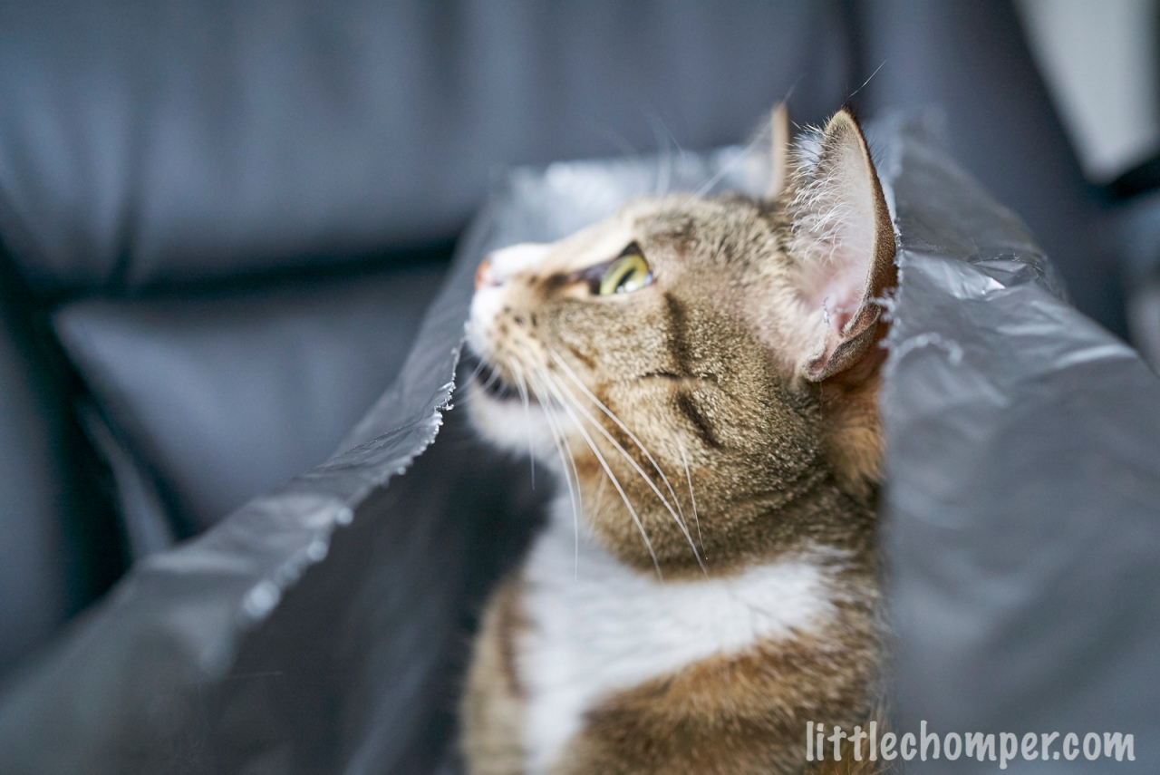 Luna peeking over edge of gray bag with mouth open.jpg
