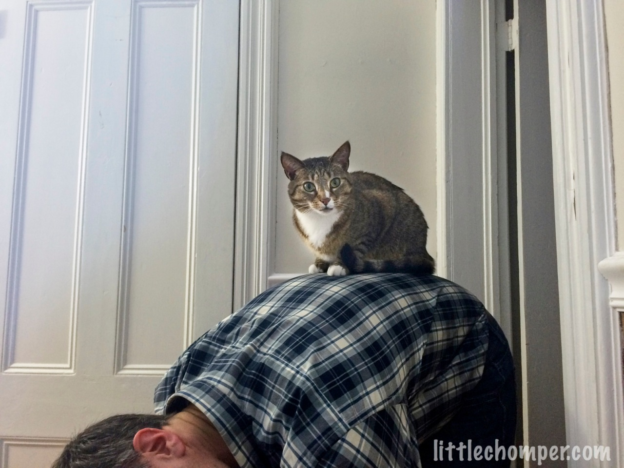 Luna on Scott's back calmly looking at camera.jpg